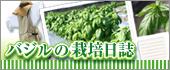 バジルの栽培日記