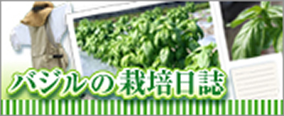 バジルの栽培日誌